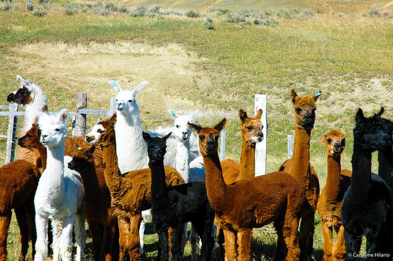 ¿Cómo se llama<br /> Porvenir<br /> Tierra del Fuego, Chilean Patagonia