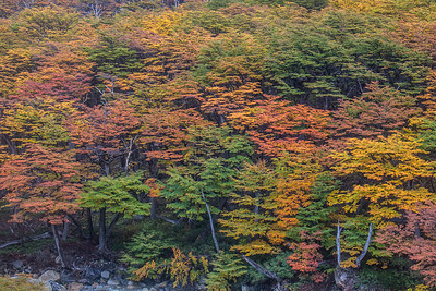 Otono.  Autumn Colors