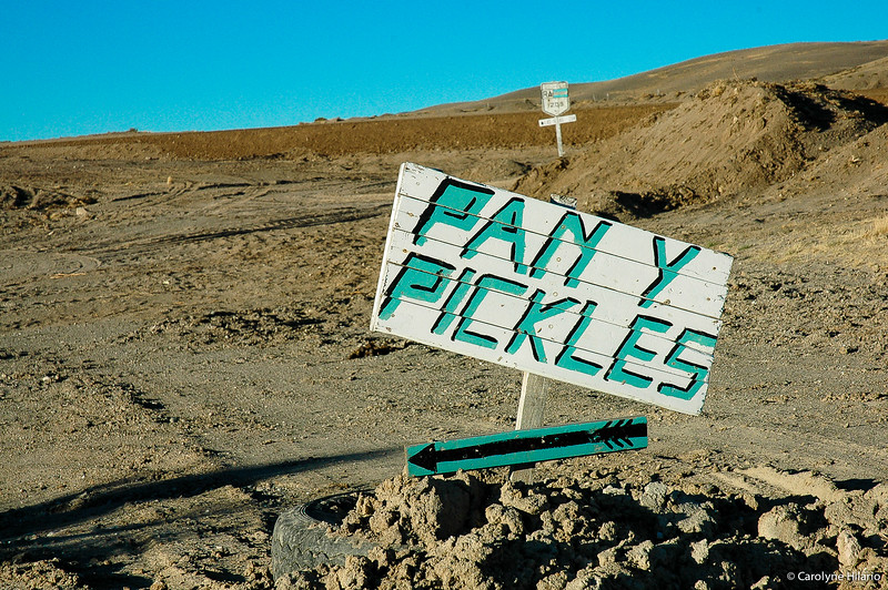 Pan Y Pickles for Sale<br /> Route 40 - Argentine Highway<br /> Argentine Patagonia