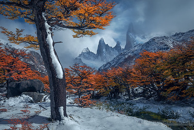 Standing Tall - Autumn In Patagonia