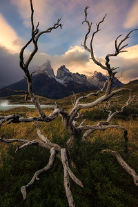 A dead tree frames the Paine Horns during sunset - Torres Del Paine, Chile