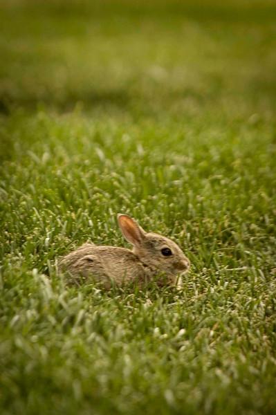 Bunny Delight