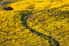 Farm Road In A Sea of Yellow