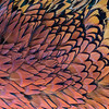 Pheasant pelt