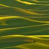 Palouse in green