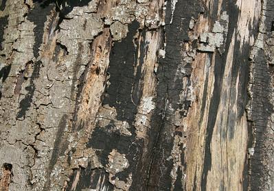 Silver Birch bark.