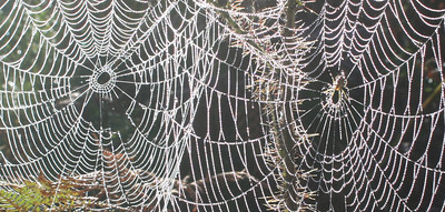 Frosted Spider's webs.