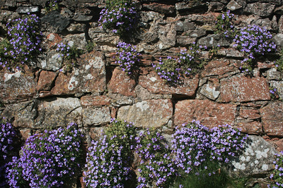 Flowers growing on a wall.