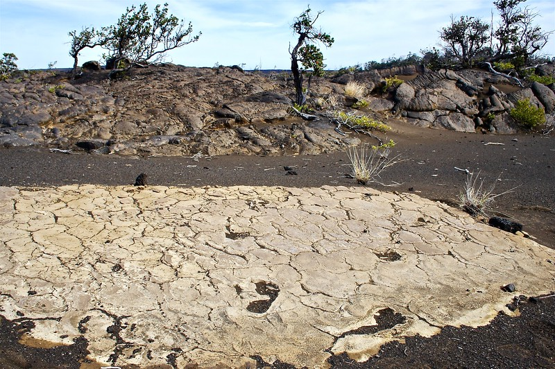 Footprints of Hawiian warriors caught in an ash eruption remain in  Kau'u on the Big Island. Native O'hia trees, in the background,  have emerged  through the flows.  April, 2006.
