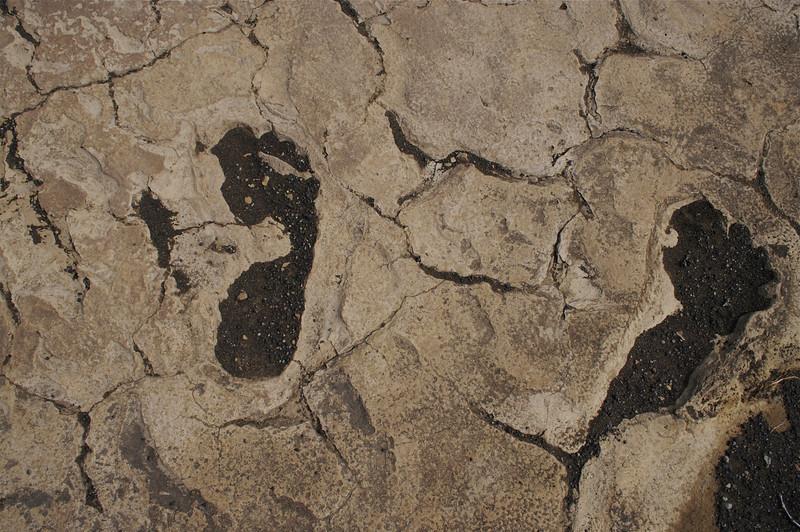Footprints left in falling ash by Hawaiian warriors overtaken by volcanic eruption, 1789;<br />  Ka'u, Island of Hawai'i. April 2006.