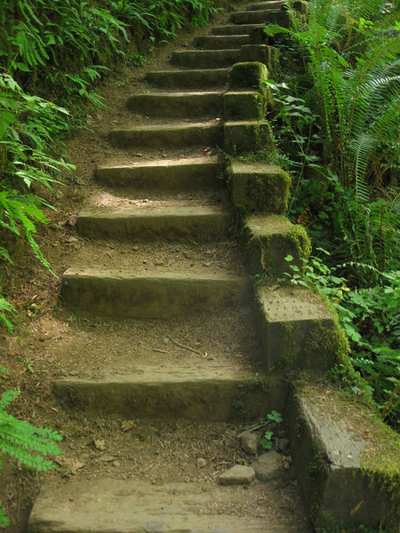 Forest steps, Florence, Oregon