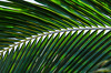 Palm Frond --- 2/27/15