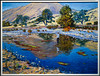 Fly_Fishing_the_Kings_River