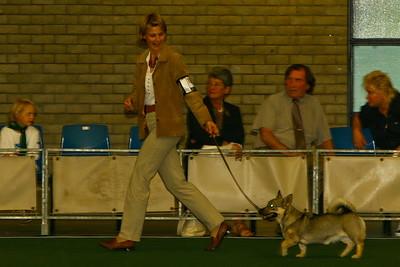Hondenshow Rotterdam 30-08-2008