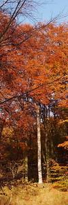 2010-10-23S_JD028