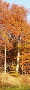 2010-10-23S_JD030