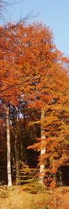 2010-10-23S_JD028-2