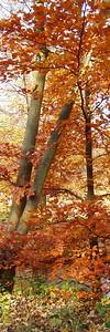 2010-10-23S_JD014