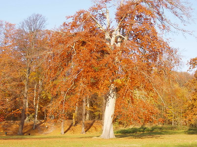 2010-10-23_JD016