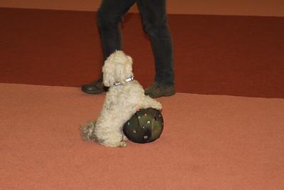 DogDance Lelystad 2012