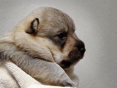 1e pupbezoek Markelo Nissa Pups puppies