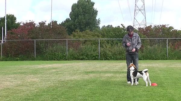 meelopen en spelen Beagle