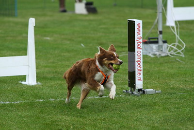 KCDelft Flyball 2014