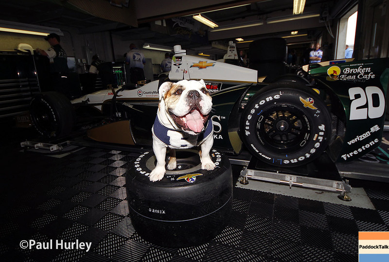 May 13: Butler University mascot Blue III during practice for the Indianapolis 500.