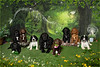 Pawsnap Pet Photography