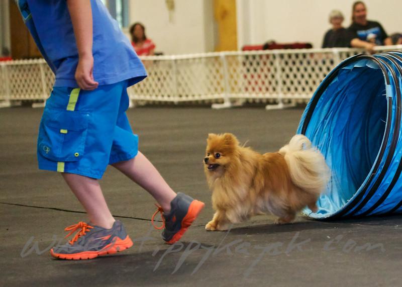 Jezebel the Pomeranian