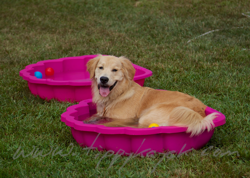 Hudson in the Pool