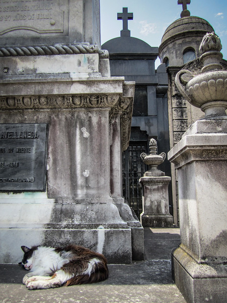 Cemetery Feline