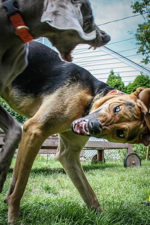 Lola play