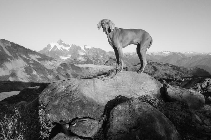 Backcountry Dog