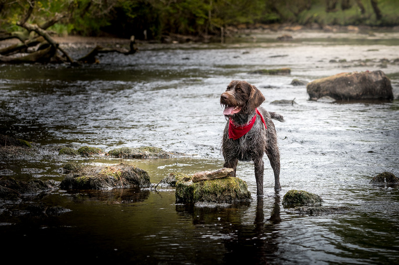 Hector in the River Forth