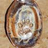 African Lion Platter