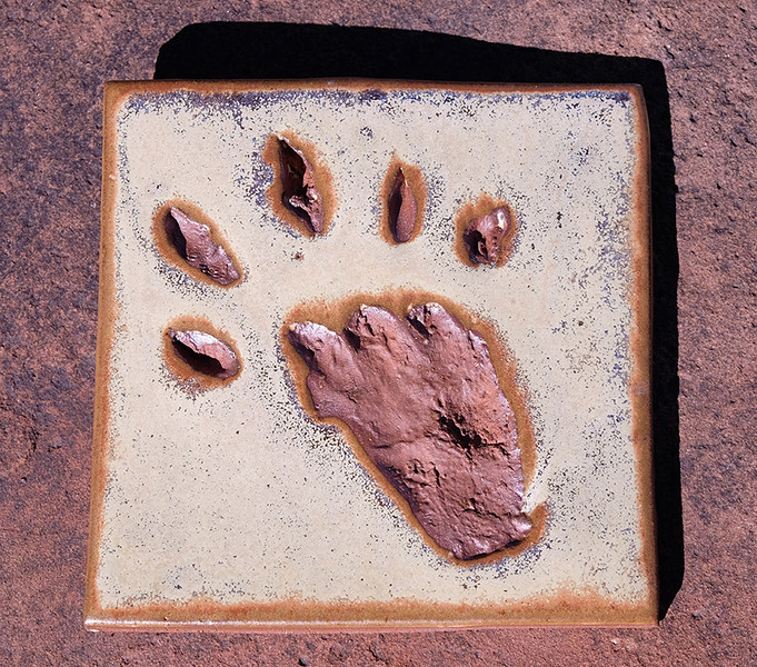 American Beaver Tile