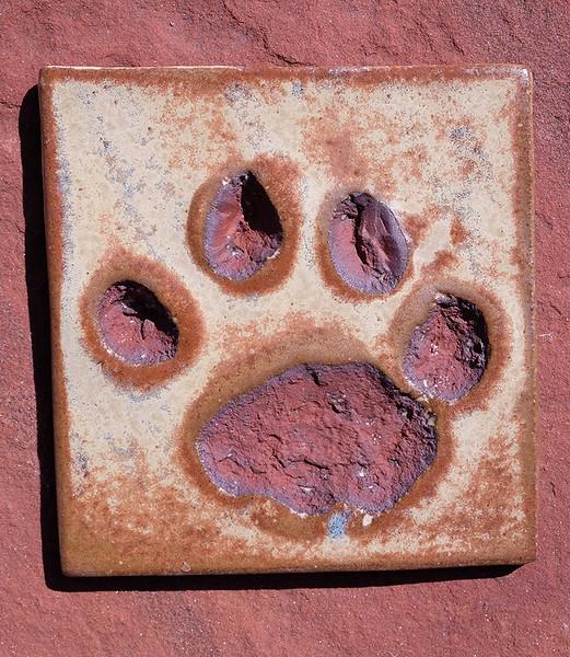 African Lion Tile