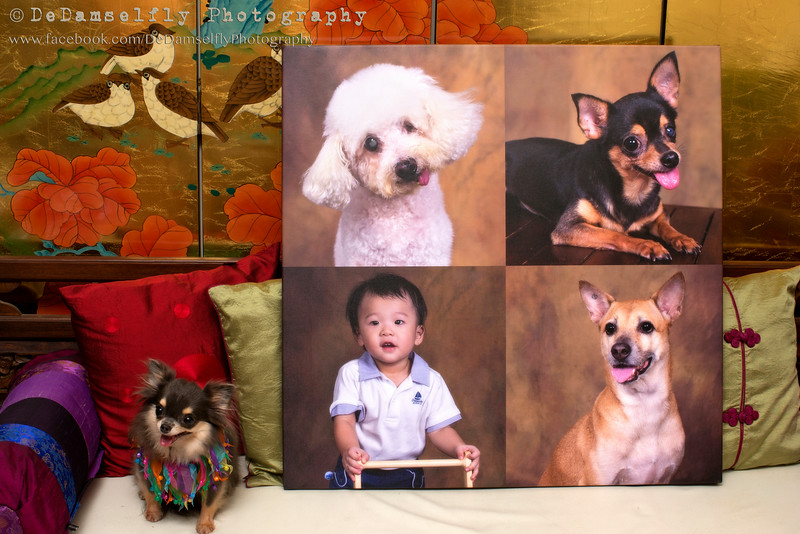 A special custom-order of an extra large (29 x 29 inch) canvas collage for Madison, Crystal, Poochie and Obe. Our smallest collage size is 16 x 16 inch but 29 x 29 inch looks really magnificent!
