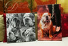 Bobo's canvases. I am so happy Bobo's pawrents decided to go with the black and white collage for these four of Bobo's images. Not all all dogs images are suitable for conversion into black and white. But these were ideal because of the areas of high and low contrast and the varied expressions on Bobo's face. I have to say, this is my fave collage to date!