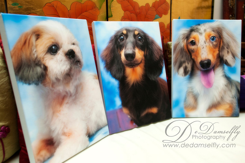 I am so happy with the client's choice of photos for the canvases. These close-ups always look so good when rendered on canvas and truly show the dogs to their best advantage.