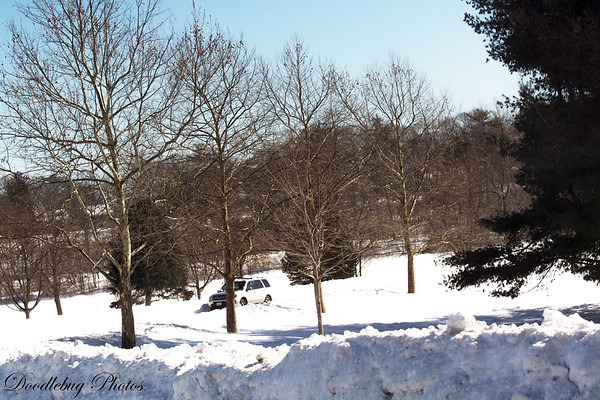 Winter 2015 Roger Williams Park Februar 16 2015 after Nemo