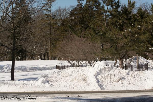 Winter Scenes February 16 2015-10