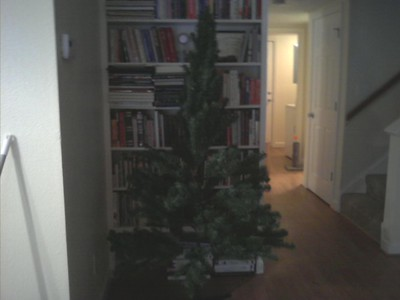 The undecorated Christmas tree in our new house...in front of the built-in bookshelves in the living room