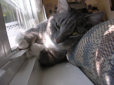 crazy cat napping