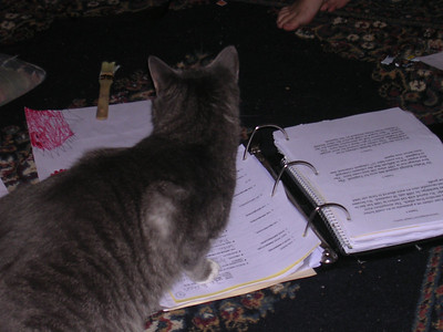 Pheobe doing homework