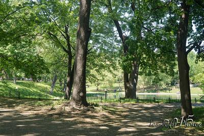 Le parc Lafontaine en image