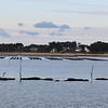 Les casiers à huitres dans le Golf du Morbihan