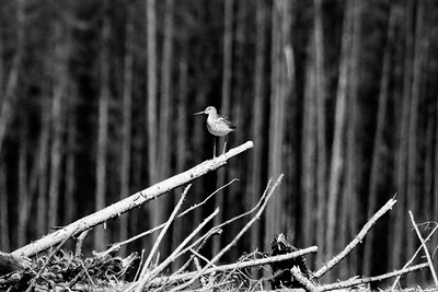 Copyright Janick Houle photographe