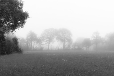 Dans la brume un dimanche matin (In the mist on a Sunday morning)